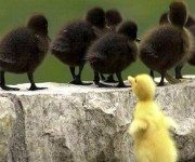 ugly-duckling-discrimination