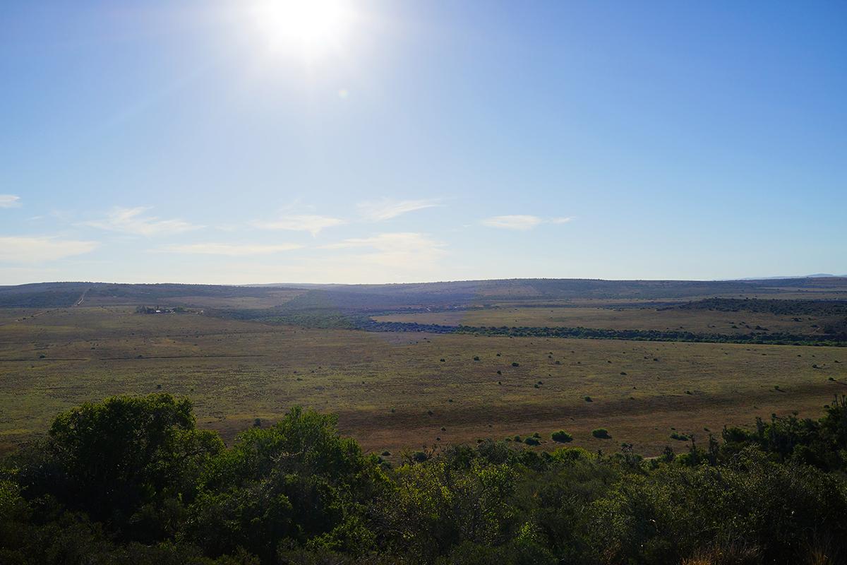 アフリカ サファリ 草原