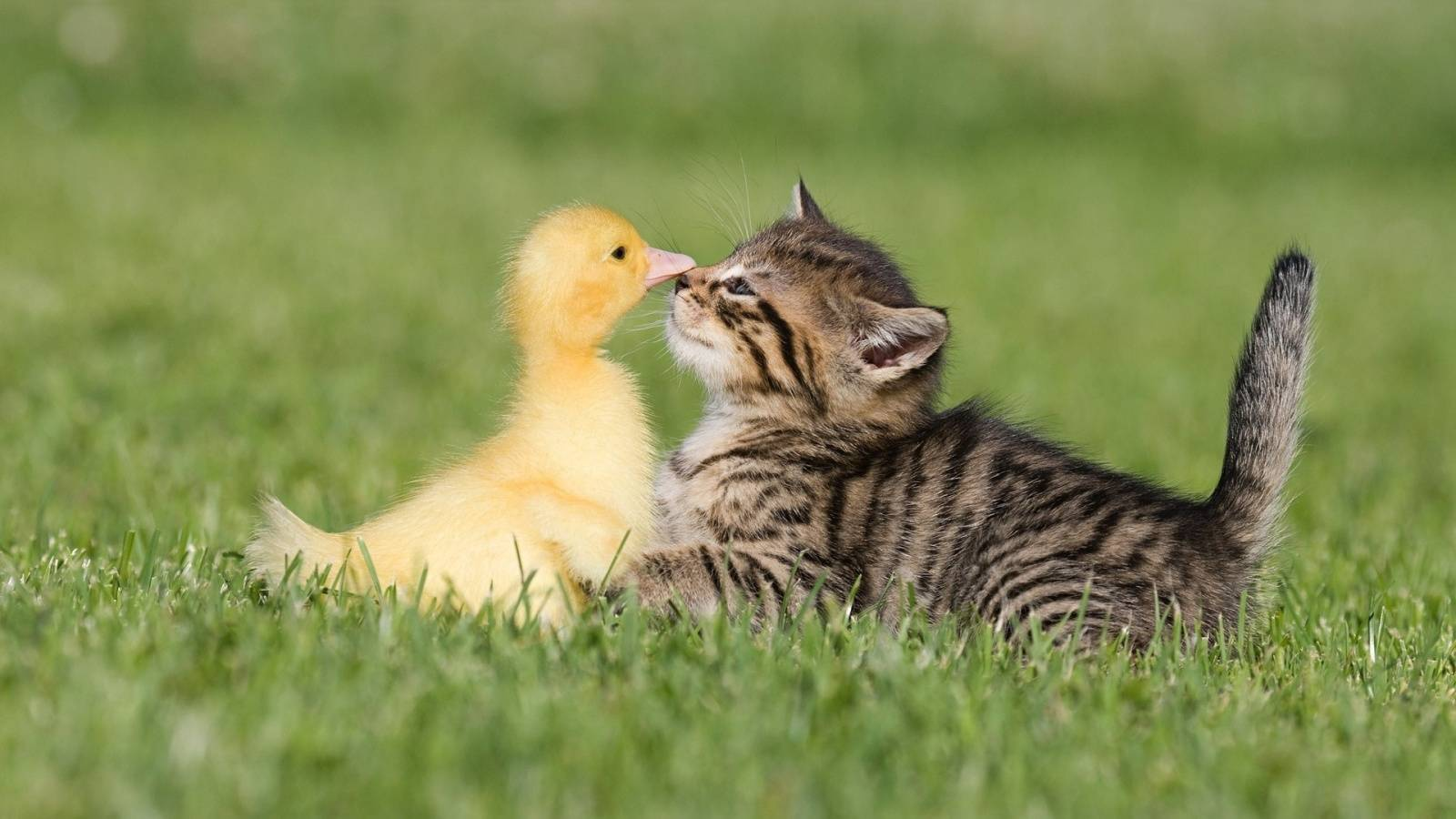 cats-birds-friends